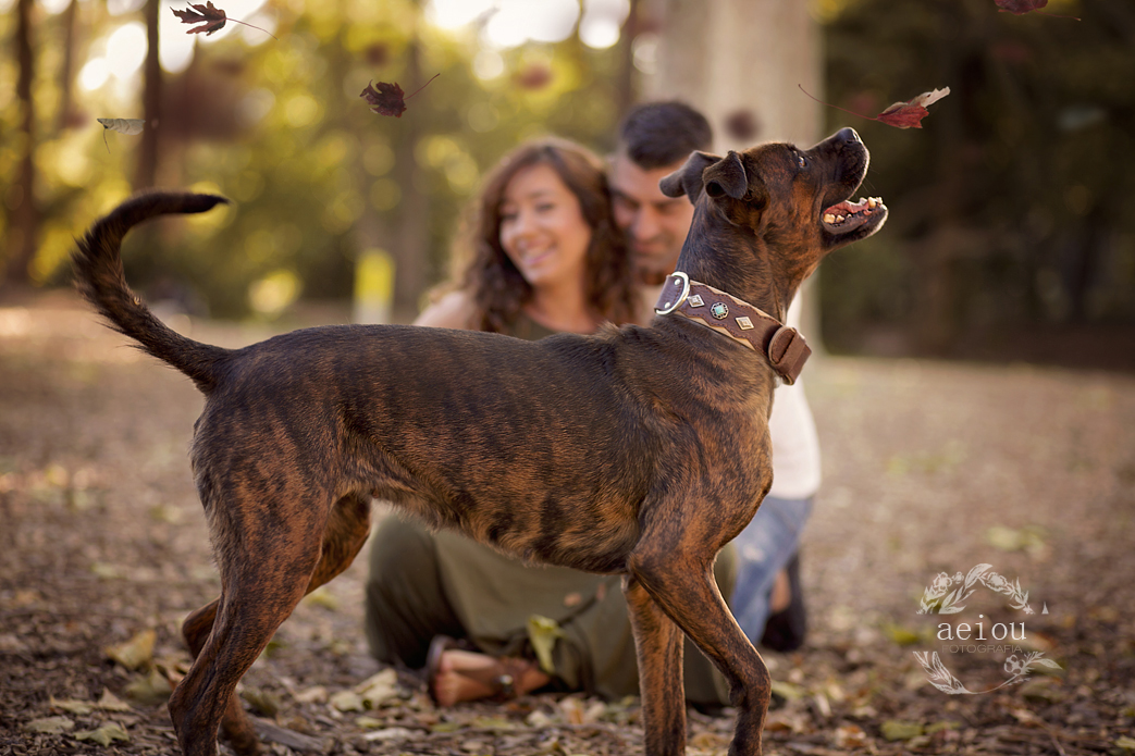 fbook embarazo fotografias premama sesiones fotos exteriores embarazo